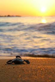 Sand Beach by Mobile Hd Wallpapers Baby Turtle Sand Beach Water Mobile Hd