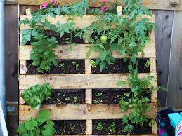 62 my herb garden plan large how to grow vegetables all year long