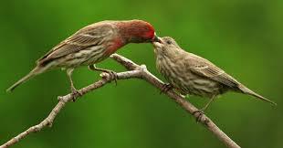 Backyard Wild Birds by Wild Birds Unlimited January 2014