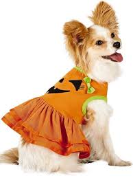 Martha Stewart Dog Halloween Costumes Halloween Costumes Pets Scary Fun U2014fur Shopblog