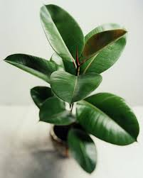 Green Plants The Top 10 Air Purifying Plants For Your Home