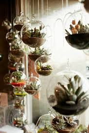 home plants decor indoor plants for home decor homeus dcor lowlight indoor plants