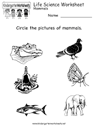 kindergarten life science worksheet printable worksheets legacy