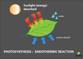 enthalpy surfguppy chemistry made easy visual learning