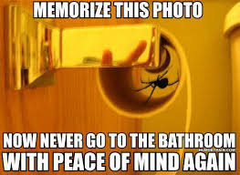 Funny Spider Meme - spider in toilet paper roll my style pinterest scary humor