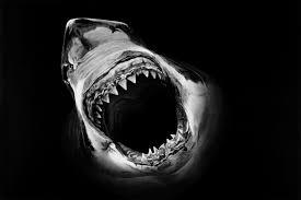 hyper realistic charcoal shark drawings