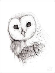 50 best tattoo pencil sketches of owls images on pinterest owl