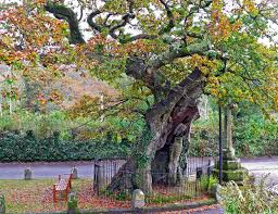 competition launches to find the uk s best tree cetusnews
