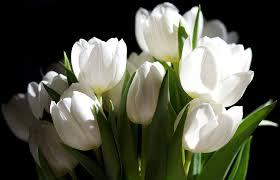 white flower white flower 58 free wallpaper hdflowerwallpaper