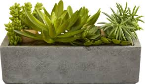Concrete Succulent Planter Mercury Row Succulent Floor Plant In Concrete Planter U0026 Reviews