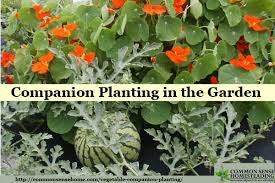 vegetable companion planting in the garden
