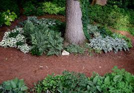 Shade Garden Ideas Theme Gardens Part 1 Silver And Blue Carolyn S Shade Gardens