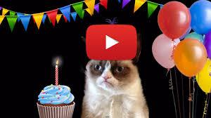Grumpy Cat Birthday Memes - grumpy cat meme happy birthdaygrumpy cat meme happy birthday