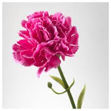 carnation flowers smycka artificial flower ikea