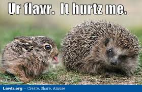 Hedgehog Meme - adorable hedgehog memes