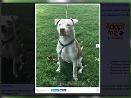 american pitbull terrier illegal warrant dog in deadly attack brought into state illegally