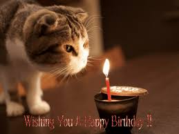 Happy Birthday Meme Gif - 20 happy birthday gif images animations signs collection
