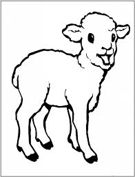 sheep colouring pages for kids