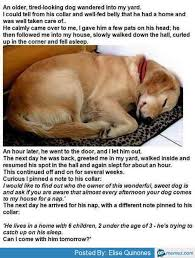 Tired Dog Meme - tired dog meme 28 images tired dog memes image memes at