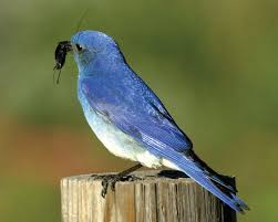 Colorado birds images Report habitat loss hurting colorado birds jpg