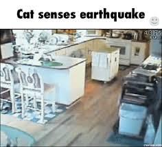 Earthquake Meme - earthquake gif find share on giphy