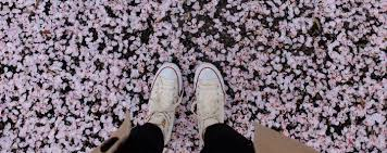 dyed in pink the 2017 cherry blossom guide part 2 outside