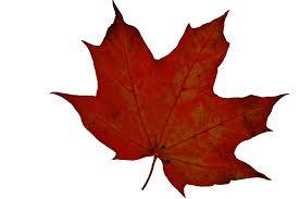 autumn leaf free stock photo public domain pictures