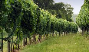 South Dakota travel vans images Sip socialize and sight see a winery tour of south dakota jpg