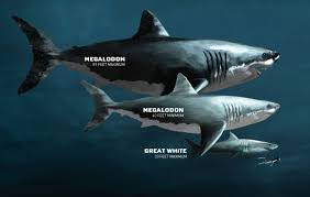 Biggest Megalodon Shark | megalodon sharkopedia