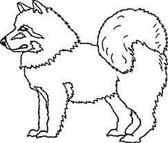 husky dog eskimo pet coloring color luna
