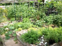herb gardens gardening ideas