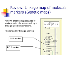 Linkage Map Ppt Locating Markers From The Genetic To The Physical Rice Map
