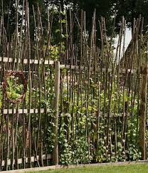 kletterpflanzen fã r balkon die besten 25 rankgitter ideen auf rankhilfen