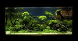Aquascaping Competition Uk Represented In Live International Aquascaping Contest