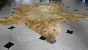 tappeti di pelliccia pelle orso e arazzo tappeto pelliccia anni 60 a genova kijiji