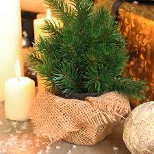 small pine tree in hessian pot melody maison