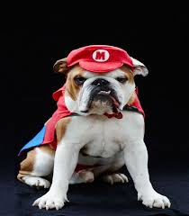 Halloween Costumes Bulldogs Halloween Costumes Dogs Overload Cuteness Easyday