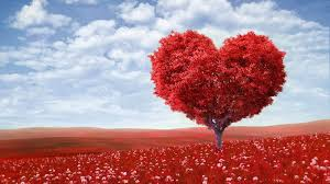 valentine u0027s day hd wallpapers and quotes free download 2014