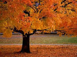 Fall Autumn by 129 Best Autumn Beauty Images On Pinterest Fall Autumn Fall And