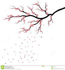 Peinture Cerisier Japonais by Fleur De Sakura Cerisier Japonais D U0027isolement Images Stock