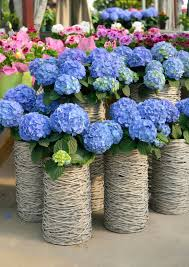 hydrangea arrangements 25 hydrangea flower pot and planter arrangements photos