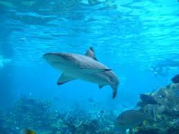aquatic animals u2013 all animal facts