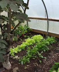 greenhouse for vegetable garden ground bed greenhouse benches pinterest greenhouse benches
