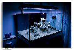 Floating Aquascape Reef2reef Saltwater And Reef Aquarium Forum - pin by matic vertačnik on aquarium pinterest aquariums