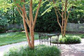 Tree Ideas For Backyard 22 Tree Shade Landscaping Ideas For Your Yards Home Design Lover