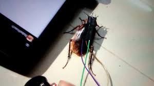 cyborg cockroach project youtube