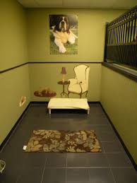 luxury dog boarding suites inspiration room make sure the walls