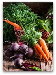 free 20 x 20 vegetable garden plan gardening pinterest