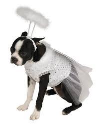 Extra Large Dog Costumes Halloween Extra Large Dog Costume Amazon