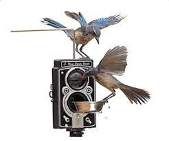 Photobooth For Sale Bird Photo Booth 2 0 Feeder With Bluetooth Remote For Ios Android